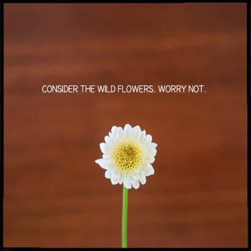 WorryNotWeb