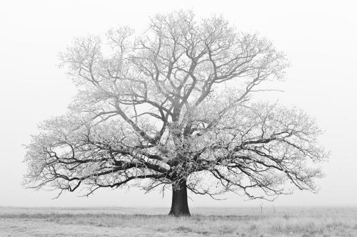 leafless winter tree
